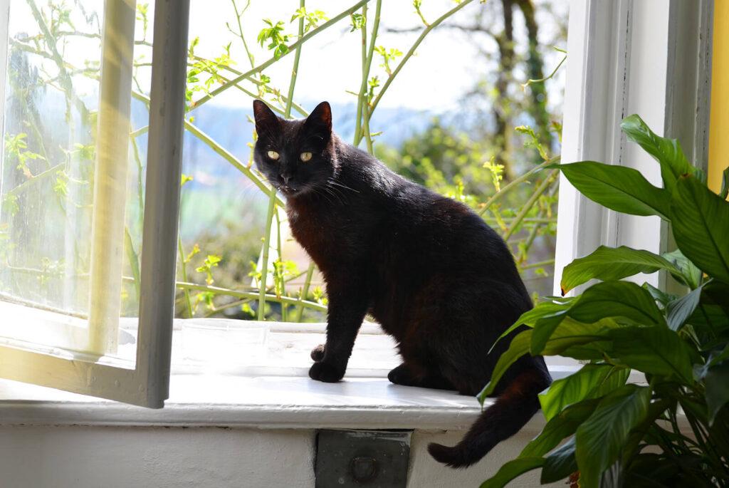窓に佇む黒猫