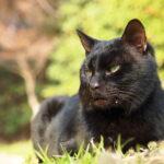 外にいる黒猫