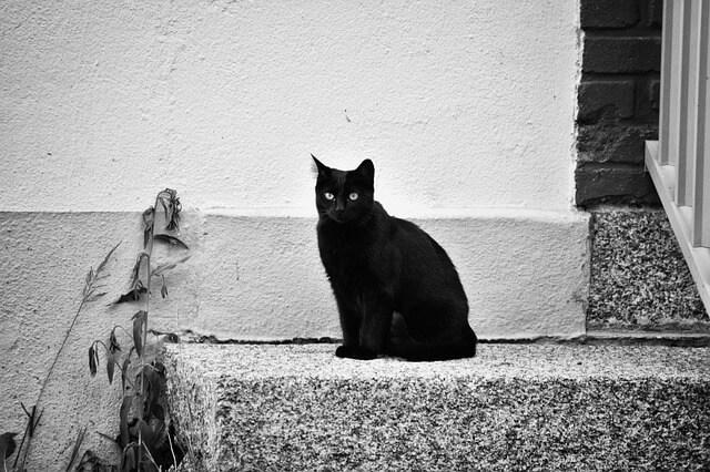 石に座った黒猫