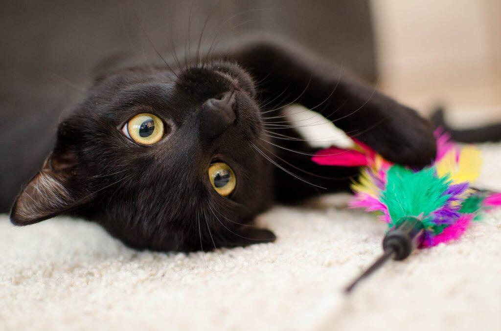 寝転ぶ黒猫のアップ写真