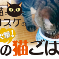 隣のネコご飯とは?