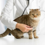 病院で診察中の猫