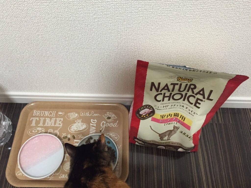 ニュートロ ナチュラルチョイス 室内猫用シニアチキン 食事中