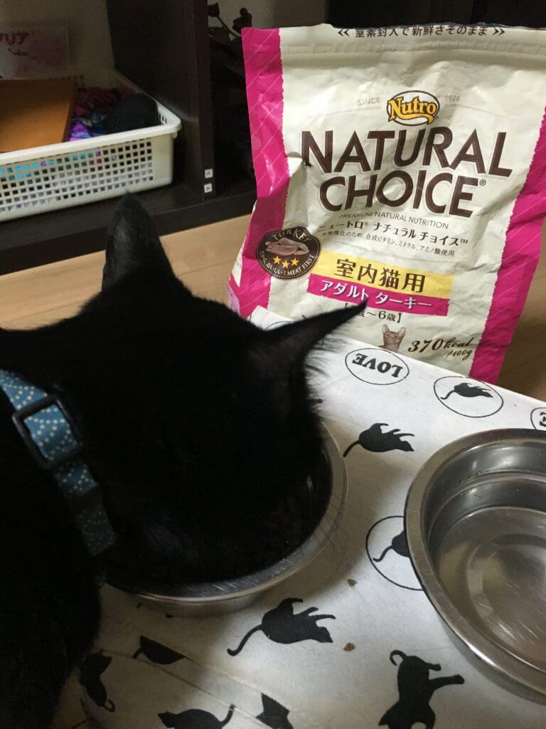 名前:ちゅけ 年齢:1歳半 性別:オス 種類:黒猫 食事中