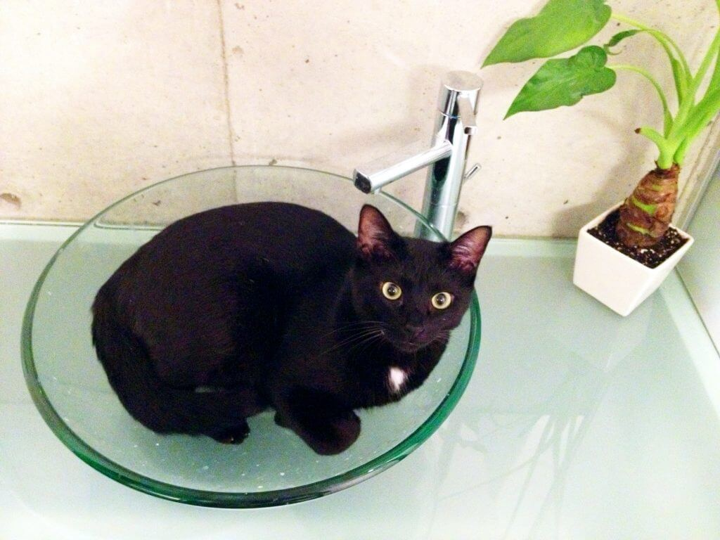 名前:佐助 年齢:5歳 性別:オス 種類:黒猫