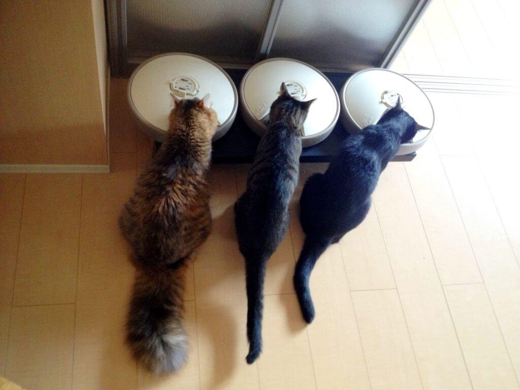名前:紅緒 年齢:6歳 性別:メス 種類:キジトラ猫 食事