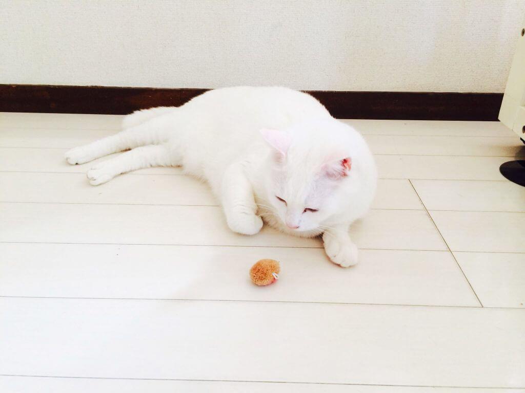 名前:幸(ゆき) 年齢:5歳 性別:オス 種類:白猫 遊び