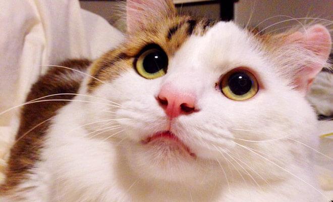 キティサムネール
