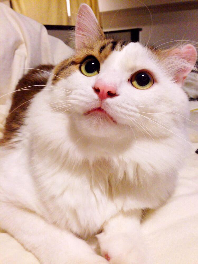 名前:キティ 年齢:3歳 性別:オス 種類:雑種