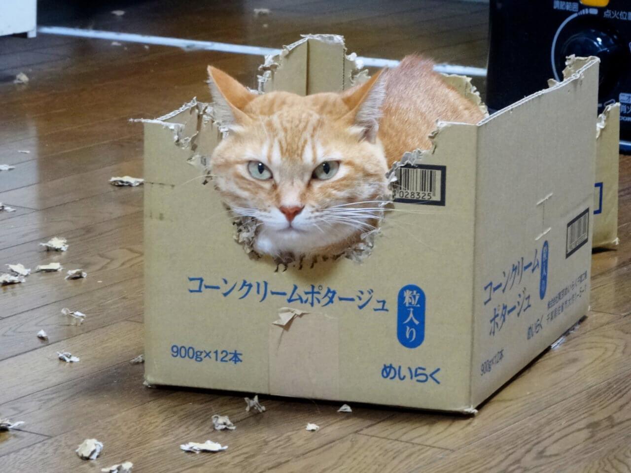 名前:ちこ 年齢:4歳 性別:メス  種類:日本猫(茶トラ)遊び