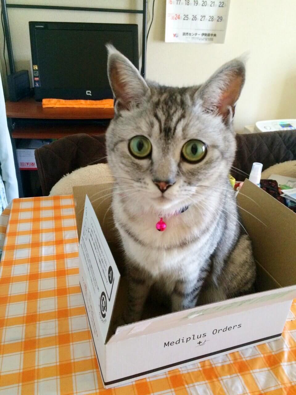 名前:チロル 年齢:4歳 性別:メス  種類:日本猫