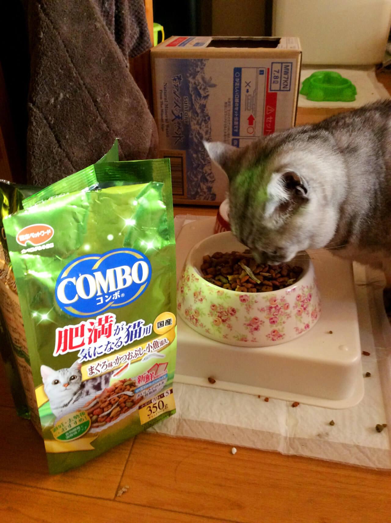 名前:チロル 年齢:4歳 性別:メス  種類:日本猫 食事中