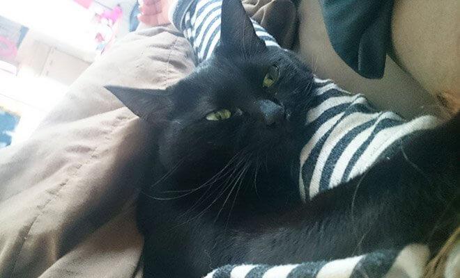黒猫チョビサムネール