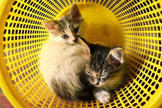 姉妹サイトと猫の兄弟